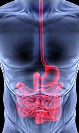 Healthy abs help gut health